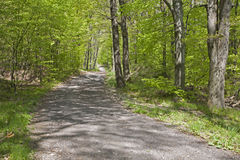Way in the spring forest Stock Photo