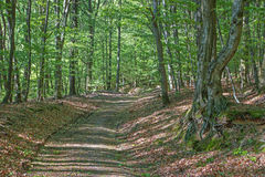 Way in spring forest in Little Carpathian Stock Images