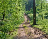 Way in spring forest in Little Carpatian Royalty Free Stock Photos