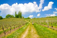 Way in springtime. Way through a vineyard in springtime near lake constance, Ueberlingen, Germany Royalty Free Stock Photo