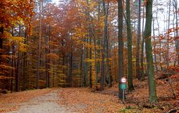 Way through a state owned forest in autumn Royalty Free Stock Image