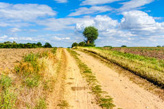 Way in summer. Through a agricultural field in Germany stock image