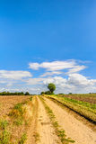 Way in summer. Through a agricultural field in Germany stock photos