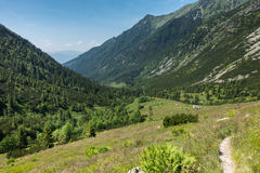 Way through summer mountain valley Stock Photos