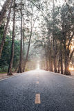 On the way with sunrise morning straight pine tree wood highway Stock Photos