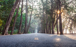 On the way with sunrise morning straight pine tree wood highway Royalty Free Stock Images