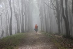 In a foggy forest to Assisi royalty free stock photos