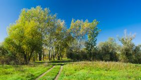 Way to an autumnal forest Stock Images
