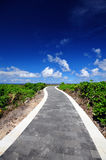 Way to the beach Stock Image