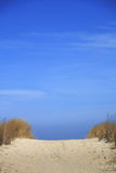 Way to the beach. On the island of Usedom, Baltic Sea, Germany Royalty Free Stock Photography