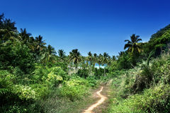 Way to beach in jungle, Phi-Phi island Stock Photos