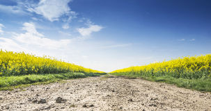 Way to fields of rape with blue sky, landscape Royalty Free Stock Photos