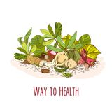 Way to health - nuts poster. Sketch style, hand drawn Stock Image