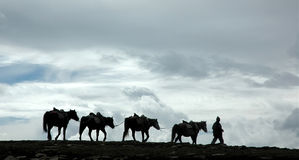 Way to the heavens. Horses and impressive cloudscape. On the way to Tibet. Himachal Pradesh. India Stock Image