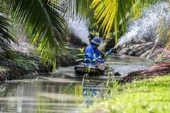 Irrigate coconut bt boat spraying. Way to irrigated coconut tree in center part of Thailand by driveing a installed motor boat through the canal and spray water Stock Images