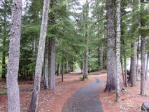 Way to the jungle. These photographs I took on my visit to mount hood at oregon usa stock photos