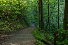 Walk in the woods, pure nature, West Tatras, Slovakia royalty free stock photo