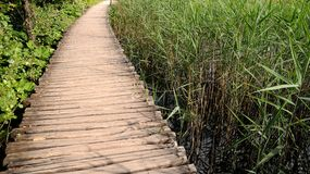 Way to nowhere. It's a wooden path in a wetland Stock Image