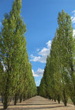 Way to Purpose. Beautiful walk way with blue sky at Versaille in France , europe Stock Photos