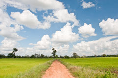 Way to rice field Royalty Free Stock Photos