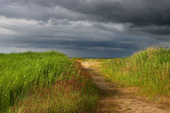 Way to the sea. With grass Royalty Free Stock Photo