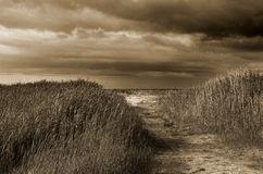 Way to the sea. With grass Royalty Free Stock Images