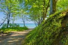 Way to sea by green deciduous forest. Green nature. Royalty Free Stock Photo