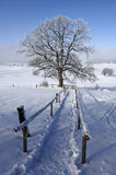 way to single tree in winter Stock Photos