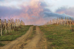 Way to vineyards. Dramatic color clouds over vineyard Royalty Free Stock Photography