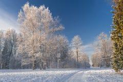 Way to winter park Stock Photos