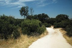 Way to zoo. Path to Madrid zoo in summer with dry grass, trees and blue sky with white cloud royalty free stock photos