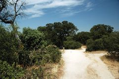 Way to zoo. Path to Madrid zoo in summer with dry grass, trees and blue sky with white cloud stock photography