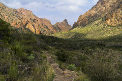 The way - of the trail in Big Bend, Texas Royalty Free Stock Photography