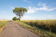 Way and tree Stock Photos