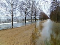 Simple road trees in flood time, Lithuania. Way and trees in spring flood time stock photos