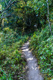 Way on tropical forest Royalty Free Stock Image