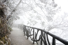 The way under trees with snow Stock Images