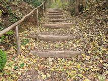 Naturel stairs in forest during autumn royalty free stock photo
