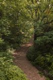 Way in the forest. Way in the verdant forest of trees and vegetation Royalty Free Stock Images