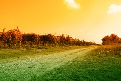 Way through the vineyard in autumn Stock Image