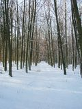 Way in winter forest Royalty Free Stock Image