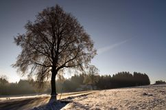 The way. Winter, sunny morning with  a tree in the  foreground Stock Image