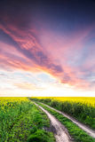 Way on yellow field.Field of rape with spectacular sky Stock Images