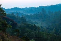 Wayanad de niebla imagen de archivo libre de regalías