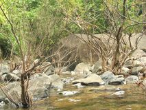 Wayanad område Arkivfoto