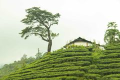 Waynad Tea gardens. At its best view Stock Photos
