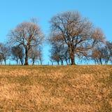 Wayrhamdale Yorkshire do leste Inglaterra Fotos de Stock Royalty Free