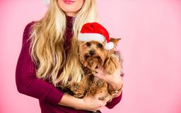 Ways to have merry christmas with pets. Girl attractive blonde hold dog pet pink background. Woman and yorkshire terrier. Wear santa hat. Celebrate christmas stock photos