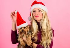 Ways to have merry christmas with pets. Woman and yorkshire terrier wear santa hat. Girl attractive blonde hold dog pet. Pink background. Celebrate christmas stock images