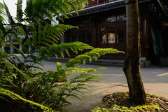 Wayside ferns before traditional buildings in sunny summer after Royalty Free Stock Photos